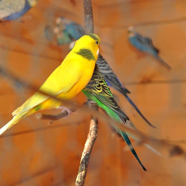 Bunte Vögel